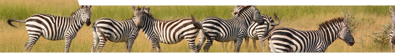 Visum Tanzania